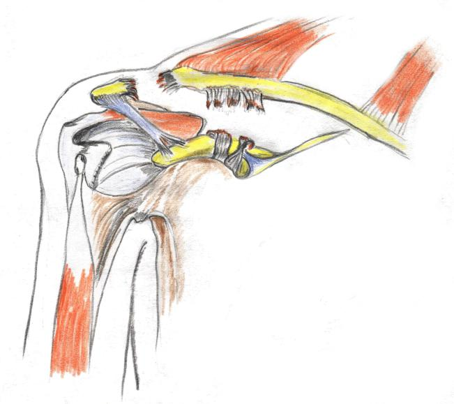 ACROMIOCLAVICULAR LUXATING EPUB DOWNLOAD